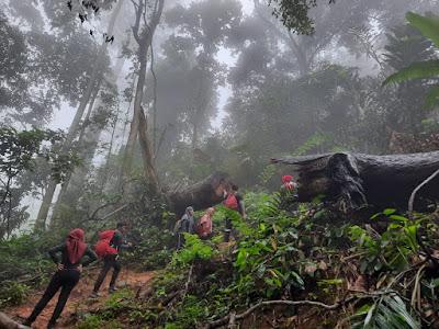 Pohon Tumbang di Gunung Sanggabuana