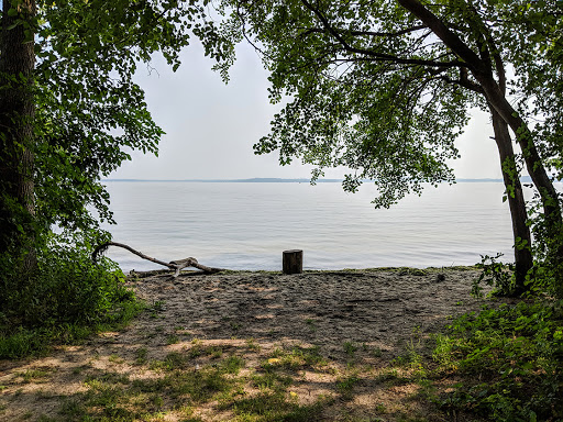 Remnants of the old beach at UW Lakeshore Preserve