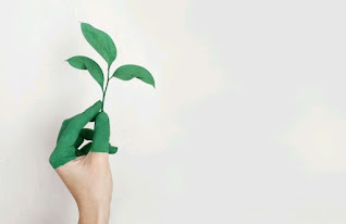 A painted hand holding a green plant – promotion of eco-friendly life