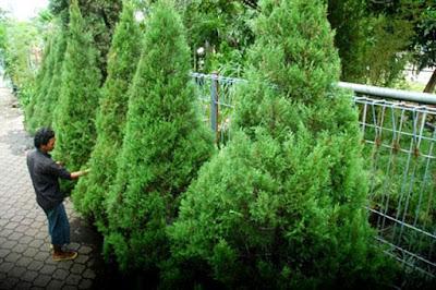 25 Jenis Tanaman Tropis Untuk Taman