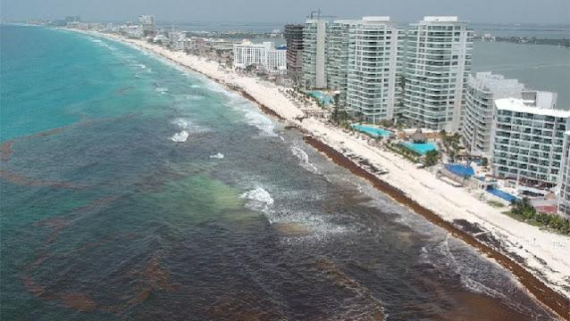 Habrá poca arribazón de sargazo este año en el Caribe: SEMAR