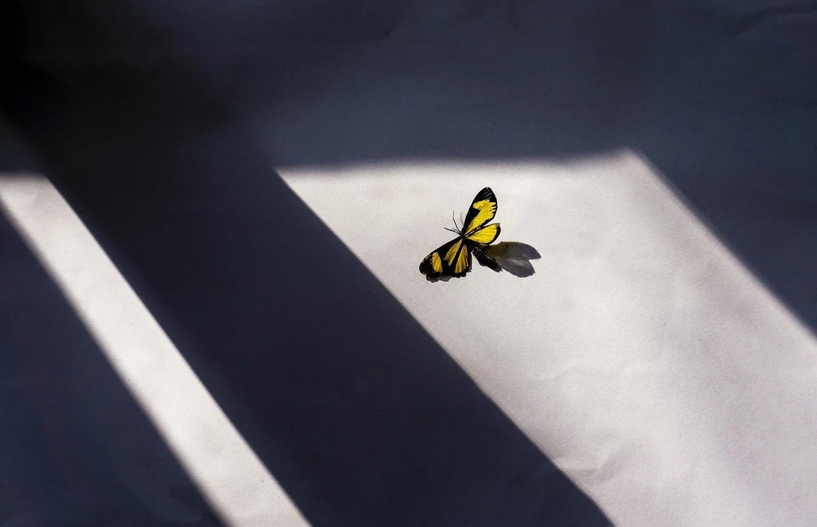 أجمل خلفيات الفراشات