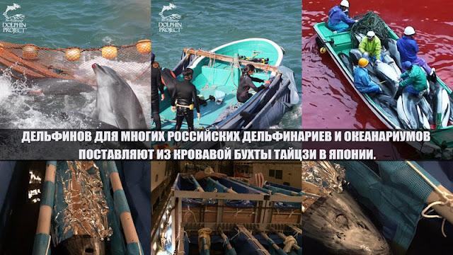 список дельфинариев в россии виды термобелья хорошо