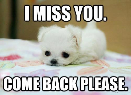 i miss you meme  13