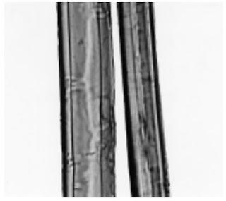 Longitudinal-View-500X-Abaca-fibre