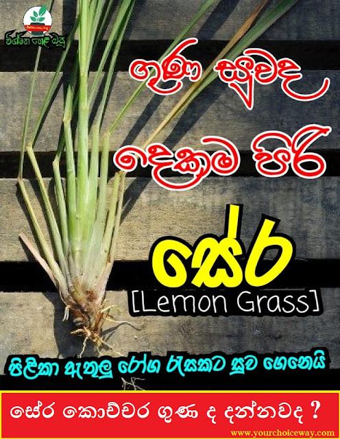 සේර කොච්චර ගුණ ද දන්නවද ? (Lemongrass) - Your Choice Way