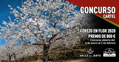 Concurso Cerezo en Flor 2020. Valle del Jerte