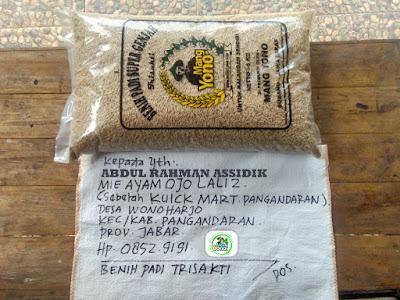 Benih padi yang dibeli   ABDUL RA. Pangandaran, Jabar.  (Sebelum packing karung).