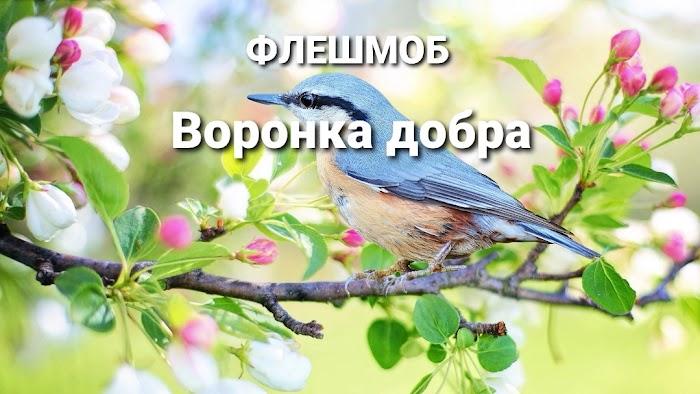 Сделаем воронку добра 23-24 июня! Птичкам еда, для меня блага!