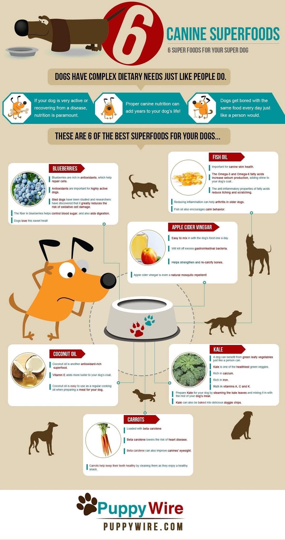 Top 6 Superfoods for Your Super Dog #infographic