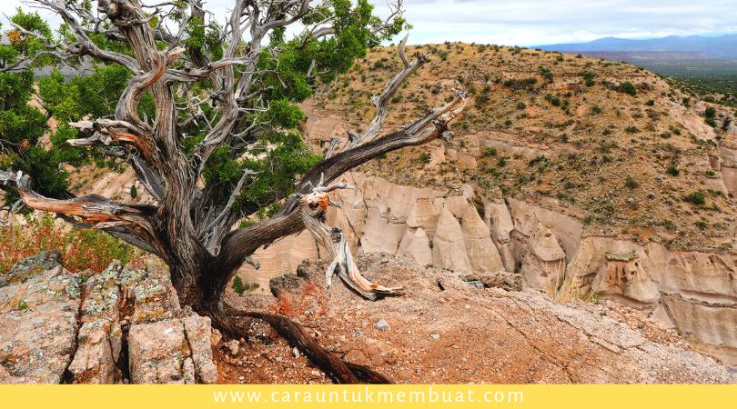 Juniper Tree on Canyonlands 1
