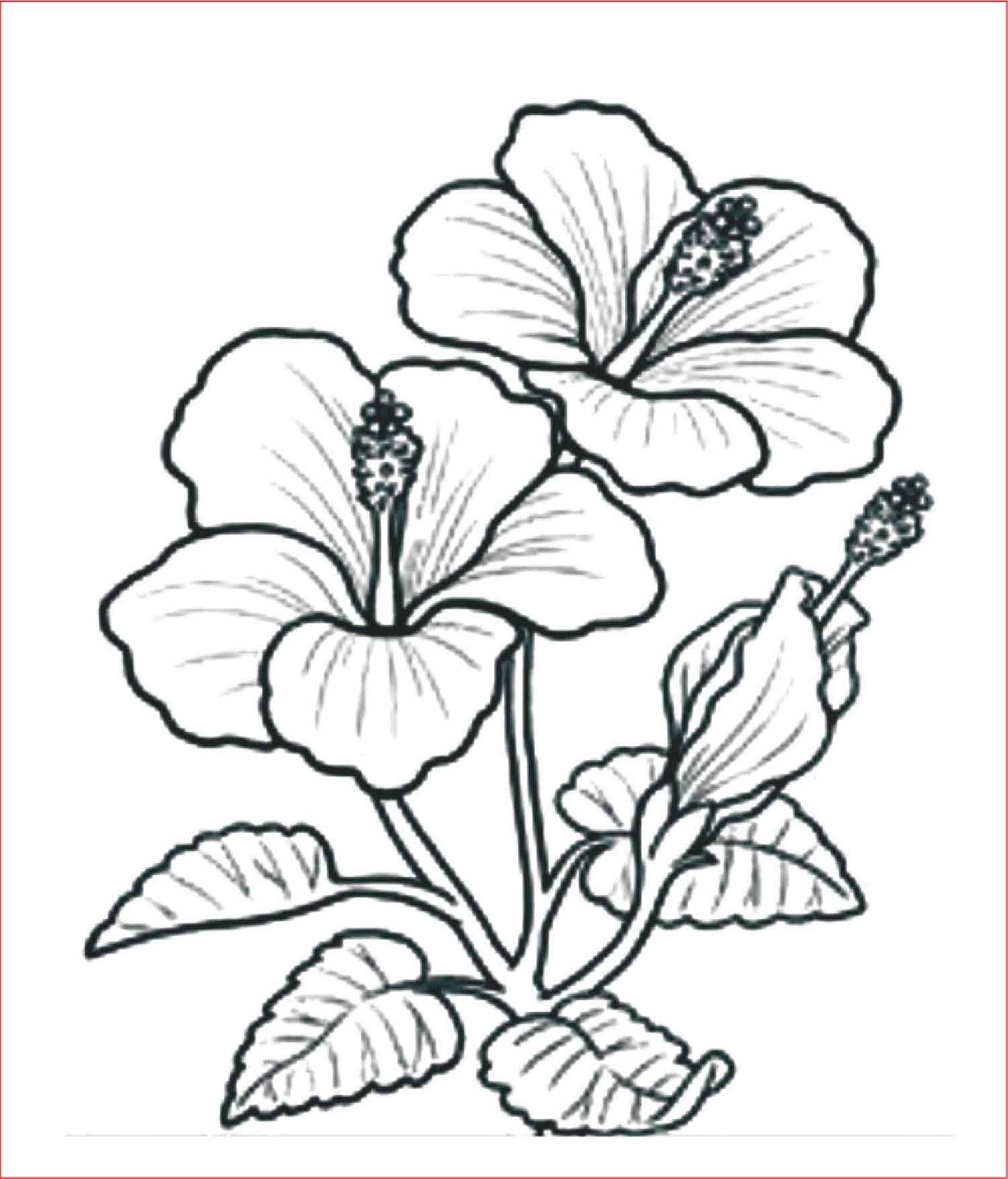 Gambar Bunga Yang Senang Dilukis Gambar Bunga Hd Cute766