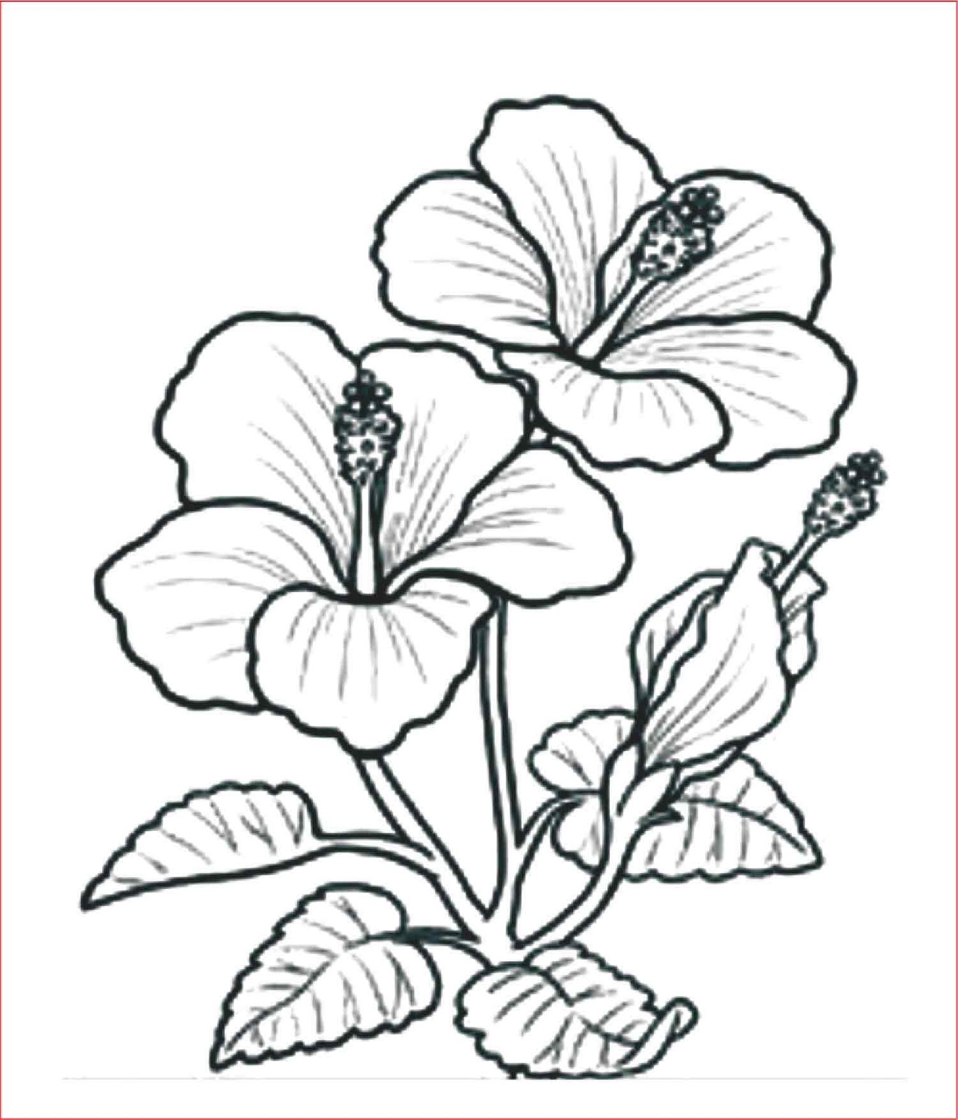 30 Gambar Sketsa Bunga Mudah Bunga Matahari Mawar Tulip Sakura Teratai Sepatu Melati Dll Seni Budayaku