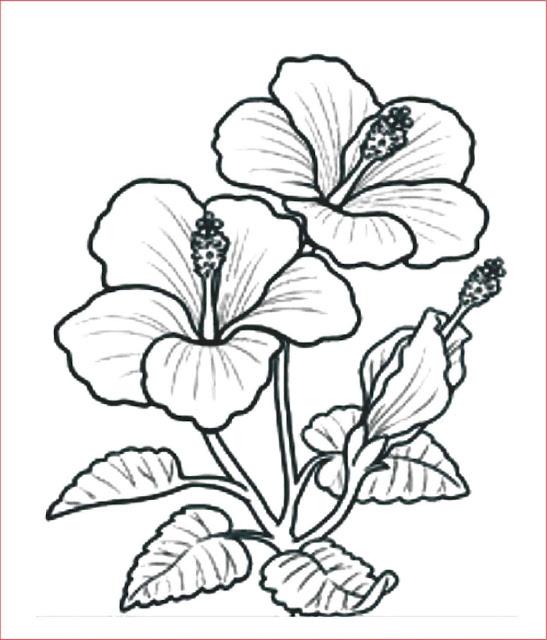 gambar-sketsa-bunga