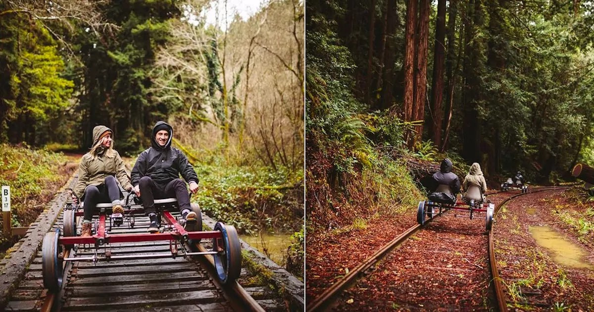 You Can Pedal Through The Heart Of California's Redwood Forest On Rail-Bikes Through The Skunk Train Railroad!