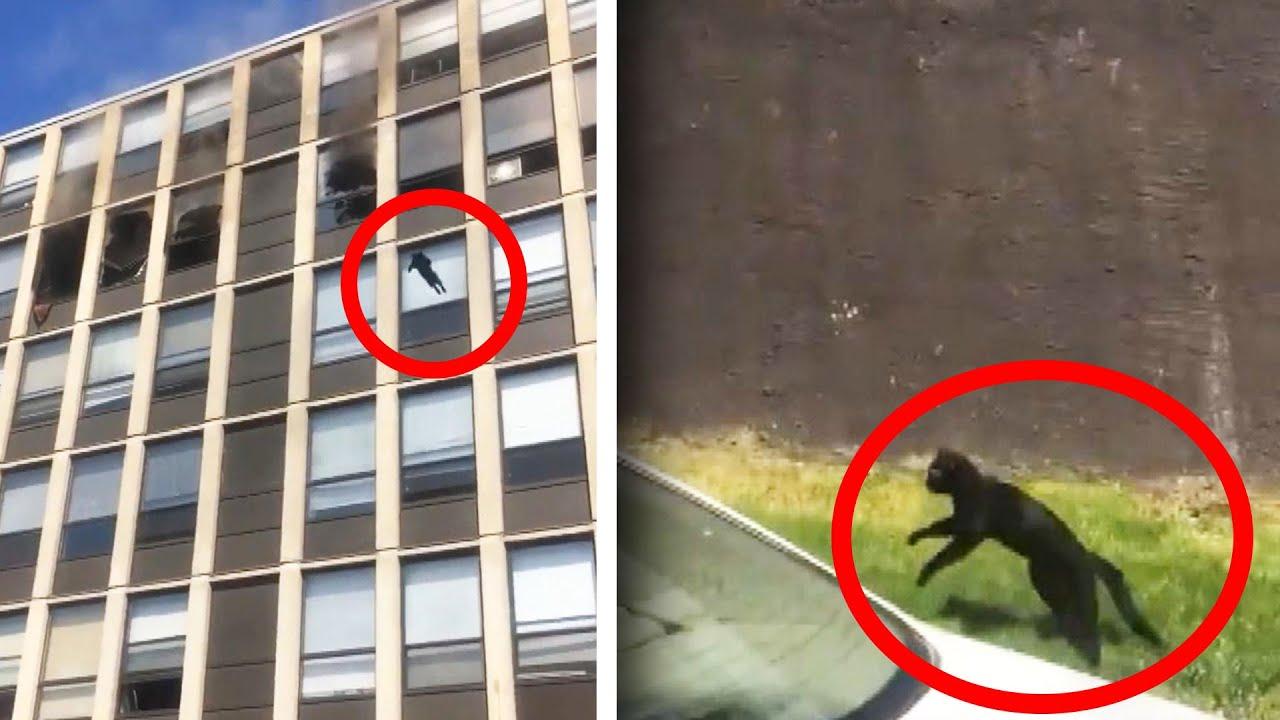 Chat qui saute du 5ème étage d'un immeuble en feu.
