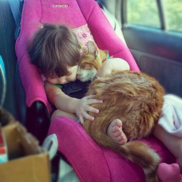 gatos-viajar-vacaciones-mudanza