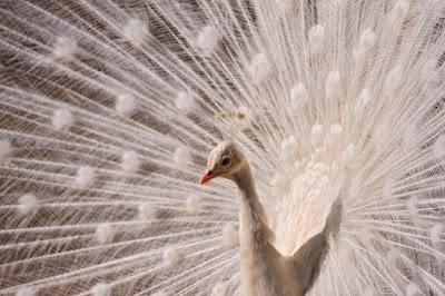 رمزيات صور طيور