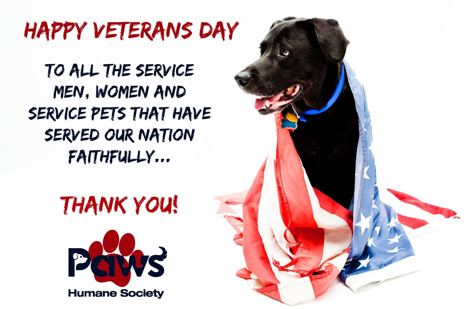 National Pets for Veterans Day Wishes Sweet Images