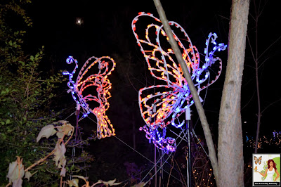 Illuminated Butterflies Bronx Zoo Holiday of Lights 2019