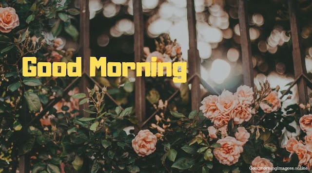 Good Morning Images In Roses 4