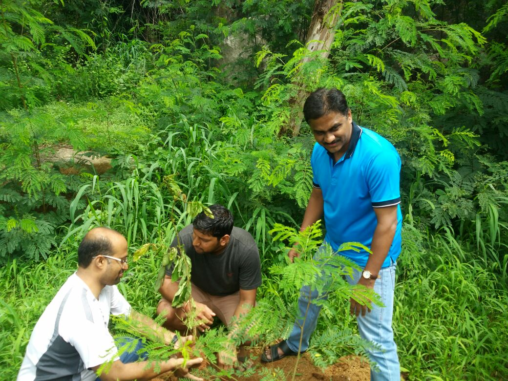 tree plantation programme We encourage people to do tree plantation in their program organized a tree plantation drive regenerationthe tree species used in a plantation is.