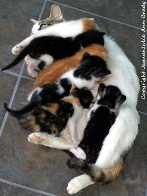 white mommy cat with her six kittens