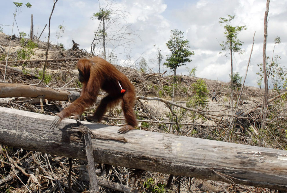 What is Habitat Loss and Destruction?