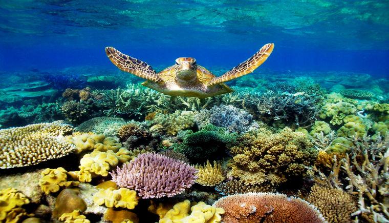 Great Barrier Reef, Terumbu Karang Terbesar di Dunia
