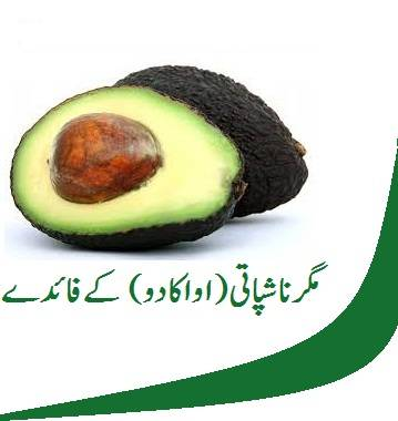 avocado in urdu