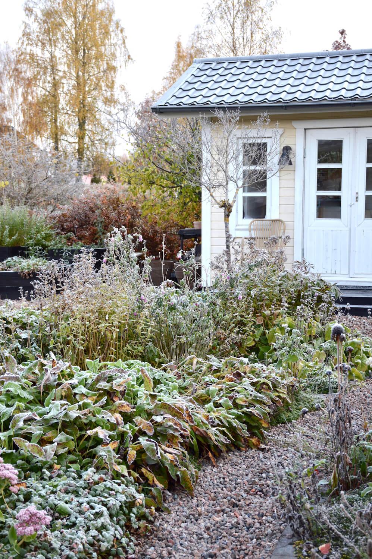 pakkasaamu-syksy-puutarha