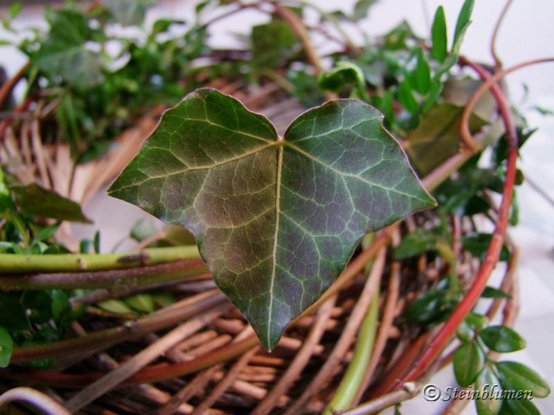 Frühlingskranz mit Hartriegel und Efeu