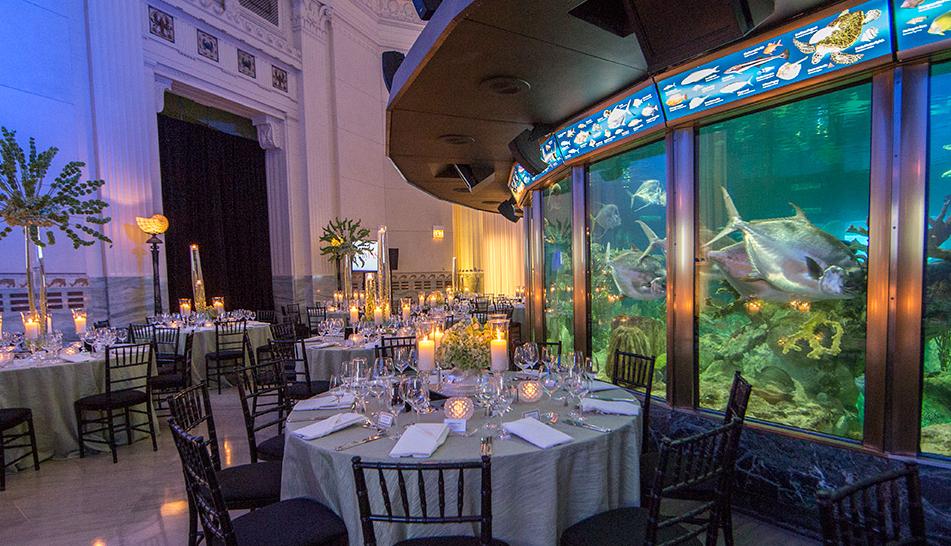 Shedd Aquarium Wedding Venue