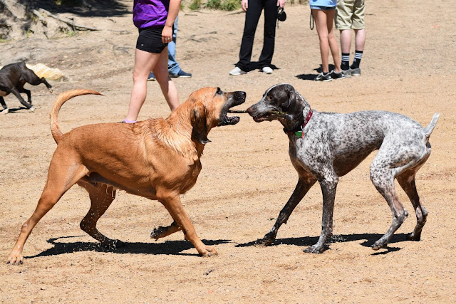 While I'm Waiting...5 lessons I learned from a trip to the dog park