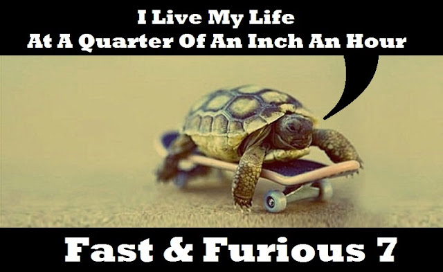 Turtle on a Scateboard being Fast & Furious 7