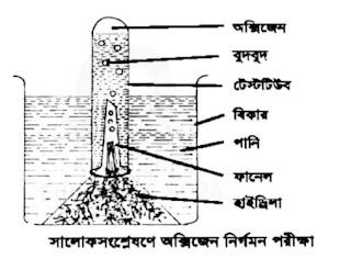 হাইড্রা উদ্ভিদ ব্যবহার করে অক্সিজেন বের হওয়ার সম্পূর্ণ পক্রিয়াটি ব্যাখ্যা করা হলো