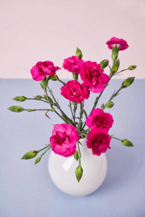 Bunga Anyelir Simbol Cinta Valentine Day