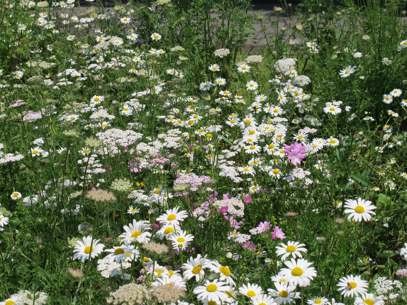 Perennial Flower Names Our Perennial Flowers In