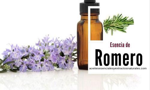 La esencia de romero de la planta Rosmarinus officinalis tiene efectos analgésicos, antimicrobianos, entre otros