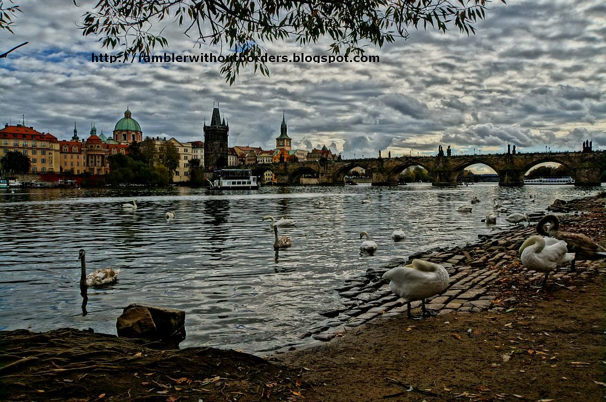 Charles Bridge with swans, Prague, CzechRepublic