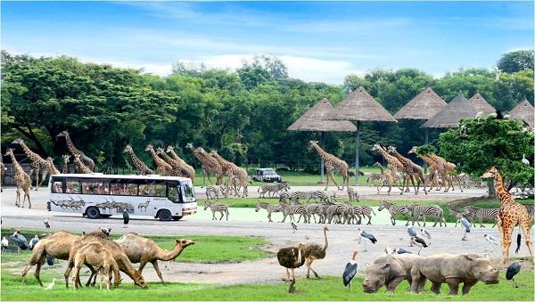 Safari World Vườn thú tự nhiên lớn nhất ở Thái Lan