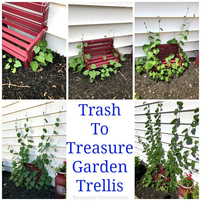 Trash To Treasure Garden Trellis text in center of 5 photos showing various stages of morning glory growing on bench trellis