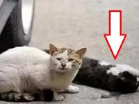 Nabrak Kucing Bawa Kesialan? Berikut Cara Mengubur Kucing Yang Ditabrak