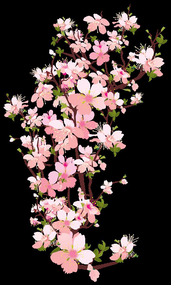 Blossom Flower Branch, flower, flower Arranging, leaf, tree Branch png free png