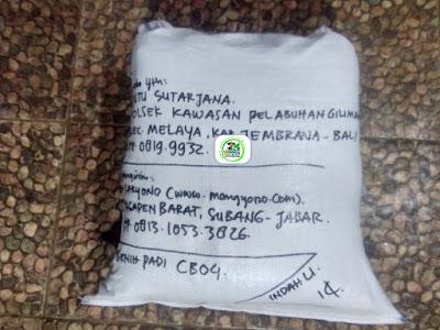 Benih Padi Pesanan   I PUTU SUTARJANA Jembrana, Bali.   (Setelah di Packing).