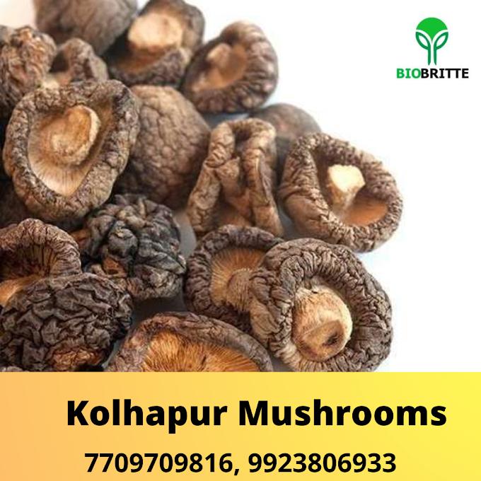 Buy Shittake Mushroom Online In Akola | Shittake Mushroom Supplier In Maharashtra | Shittake Mushroom Exporter