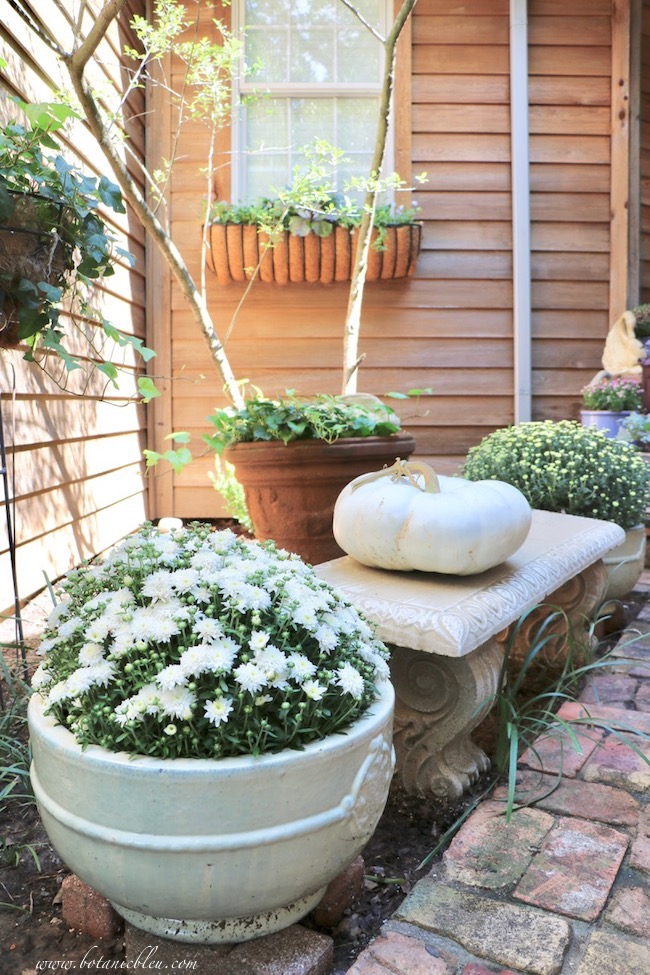 fall front entry garden decorating ideas with white mums and pumpkins