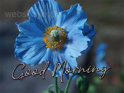 stylish good morning images