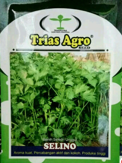 Benih Bibit Seledri SELINO 5gram Produk Unggul TRIAS agro