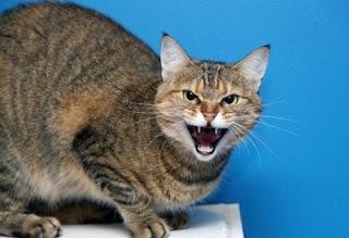 Kucing yang Sedang Stress